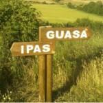 10 Guasa