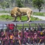 El zoo chino que encierra a los visitantes y deja libre a los animales