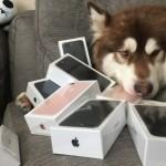 Hijo de un multimillonario le regala 8 iPhone 7 a su perra